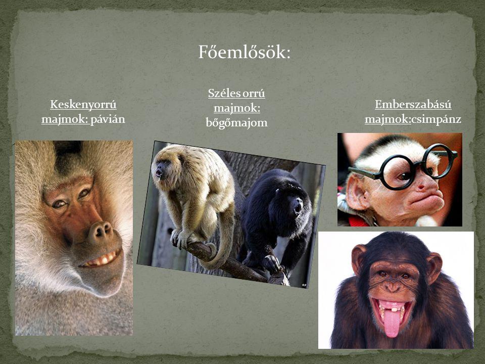 Főemlősök: Keskenyorrú majmok: pávián Széles orrú majmok: bőgőmajom Emberszabású majmok:csimpánz