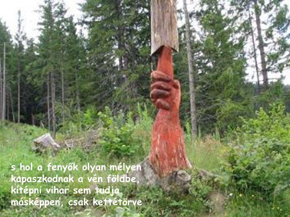 Kányádi Sándor NYERGESTETŐ Csíkországban, hol az erdők zöldebbek talán, mint máshol, ahol ezüst hangú rigók énekelnek a nagy fákon,