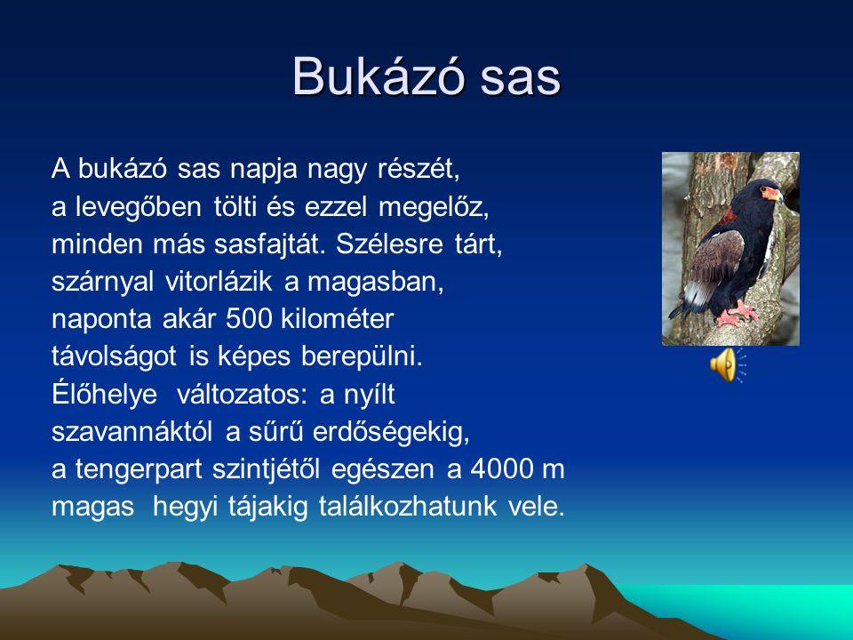 Koronás sas A koronás sas egyaránt él zárt és nyílt erdőkben, de előfordul szavannákon és fél sivatagokban is. A koronás sas reggel és késő este vadás
