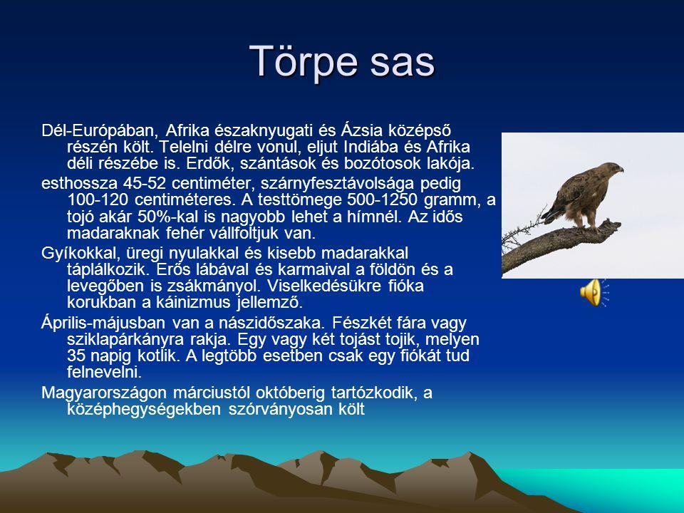 Fekete sas A fekete sas (Aquila clanga) a vágómadár-alakúak (Accipitriformes) rendjébe, ezen belül a vágómadárfélék (Accipitridae) családjába tartozó