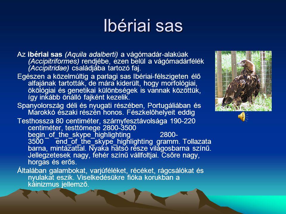 Törpe sas Dél-Európában, Afrika északnyugati és Ázsia középső részén költ. Telelni délre vonul, eljut Indiába és Afrika déli részébe is. Erdők, szántá
