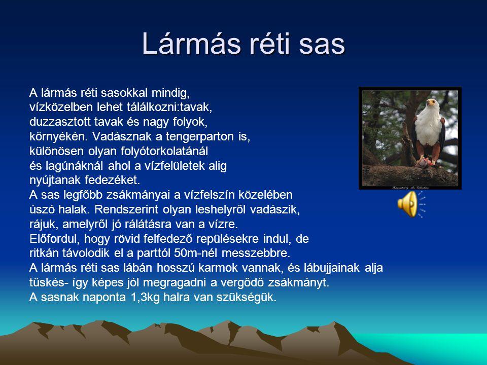 Szirti sas Szirti sas nagy madár. Amely a magasból vadászik és tágas térségben érzi jól magát. Időközben Európában és Észak-Amerikában hegyvidéki madá
