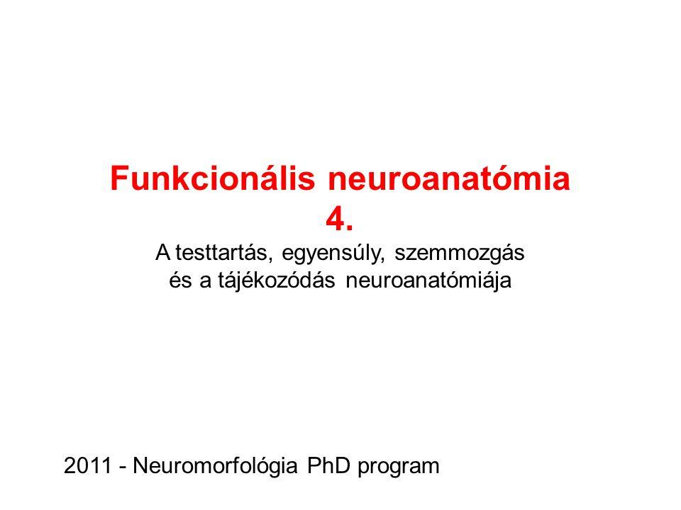 Funkcionális neuroanatómia 4. A testtartás, egyensúly, szemmozgás és a tájékozódás neuroanatómiája 2011 - Neuromorfológia PhD program