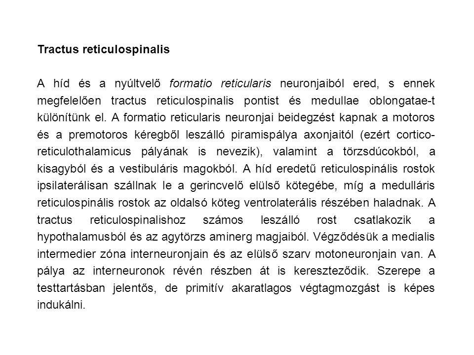 Tractus reticulospinalis A híd és a nyúltvelő formatio reticularis neuronjaiból ered, s ennek megfelelően tractus reticulospinalis pontist és medullae