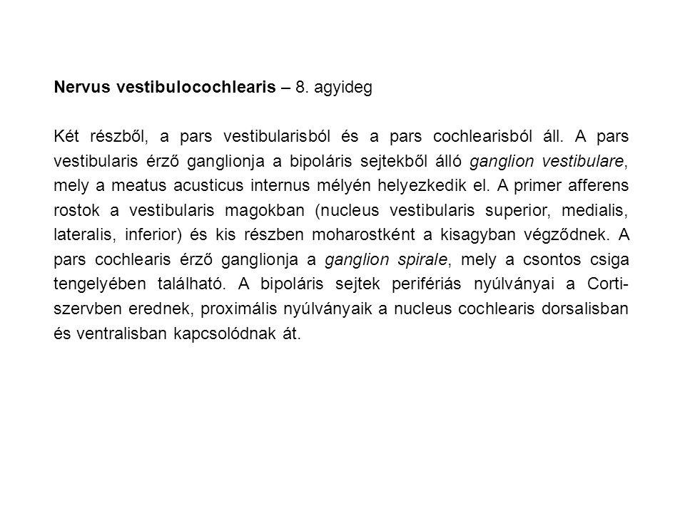 Nervus vestibulocochlearis – 8.