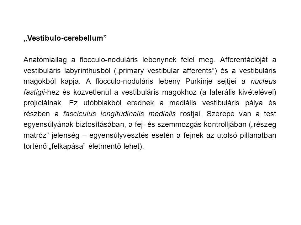 """Vestibulo-cerebellum"" Anatómiailag a flocculo-noduláris lebenynek felel meg. Afferentációját a vestibuláris labyrinthusból (""primary vestibular affer"