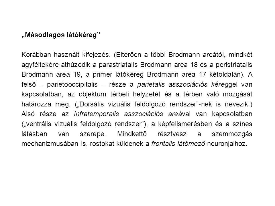 """""""Másodlagos látókéreg"""" Korábban használt kifejezés. (Eltérően a többi Brodmann areától, mindkét agyféltekére áthúzódik a parastriatalis Brodmann area"""