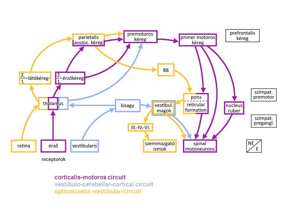 corticalis-motoros circuit vestibulo-cerebellar-cortical circuit opticokinetic-vestibular-circuit