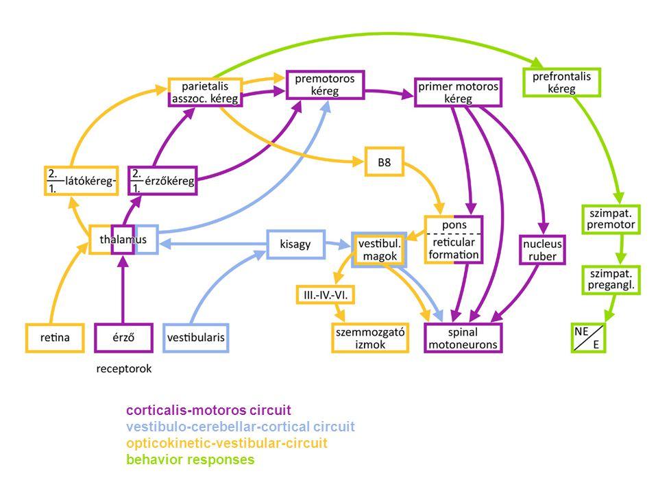 corticalis-motoros circuit vestibulo-cerebellar-cortical circuit opticokinetic-vestibular-circuit behavior responses