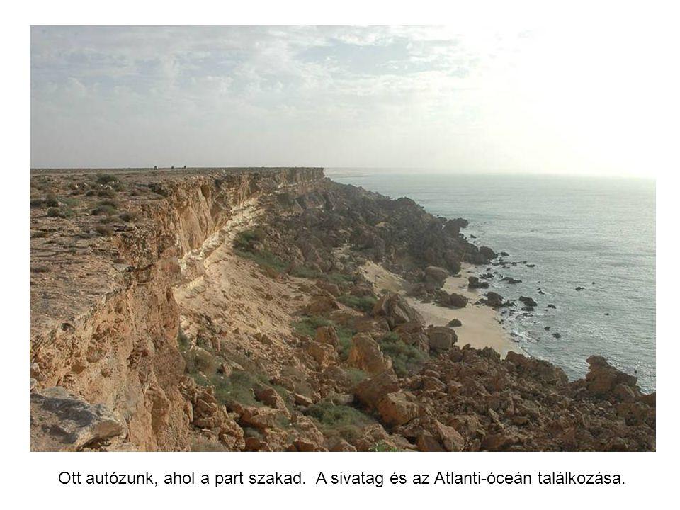 Boujdour nevű dél-marokkói város nem mindennapi városkapuja. Az érkezőket a struccokon kívül még két méretes kardhal is fogadja.