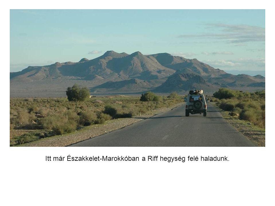 A rajt pillanata, útjára indul a nagy afrikai futam. (kattintásra változik a kép)