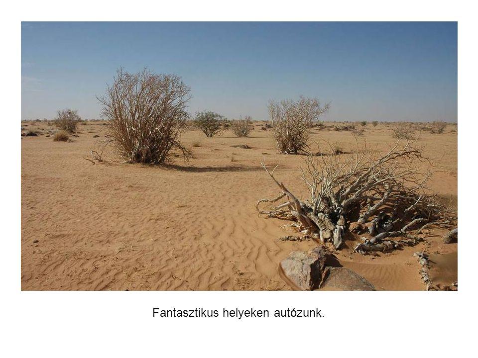 Életkép Mauritániában.