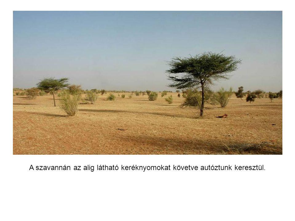 A szavannát lassan elfoglalja a sivatag.