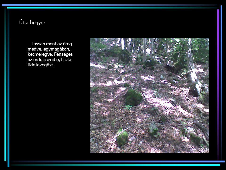 Út a hegyre Lassan ment az öreg medve, egymagában, kecmeregve. Fenséges az erdő csendje, tiszta üde levegője.
