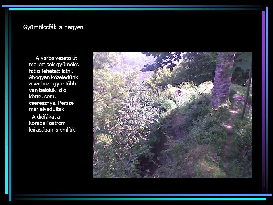 Gyümölcsfák a hegyen A várba vezető út mellett sok gyümölcs fát is lehetett látni. Ahogyan közeledünk a várhoz egyre több van belőlük: dió, körte, som