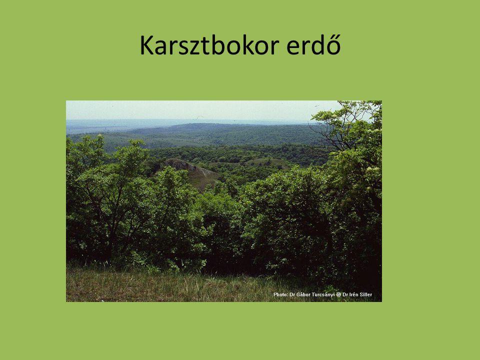 Karsztbokor erdő