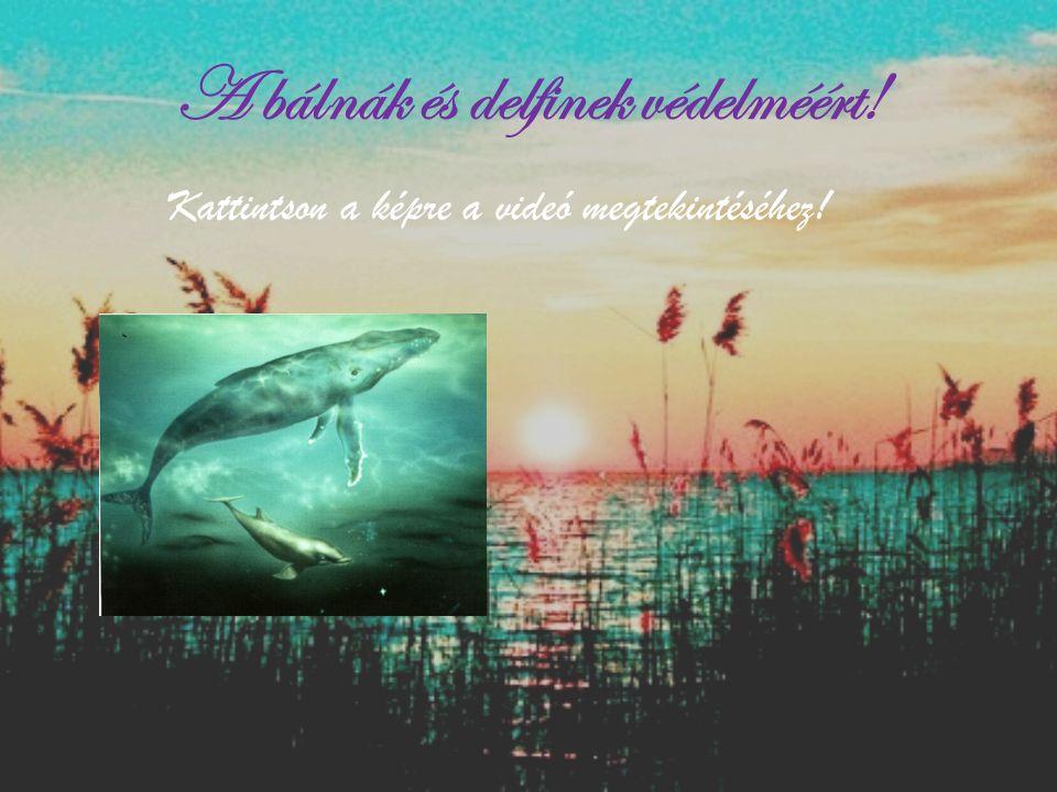 A bálnák és delfinek védelméért! Kattintson a képre a videó megtekintéséhez!