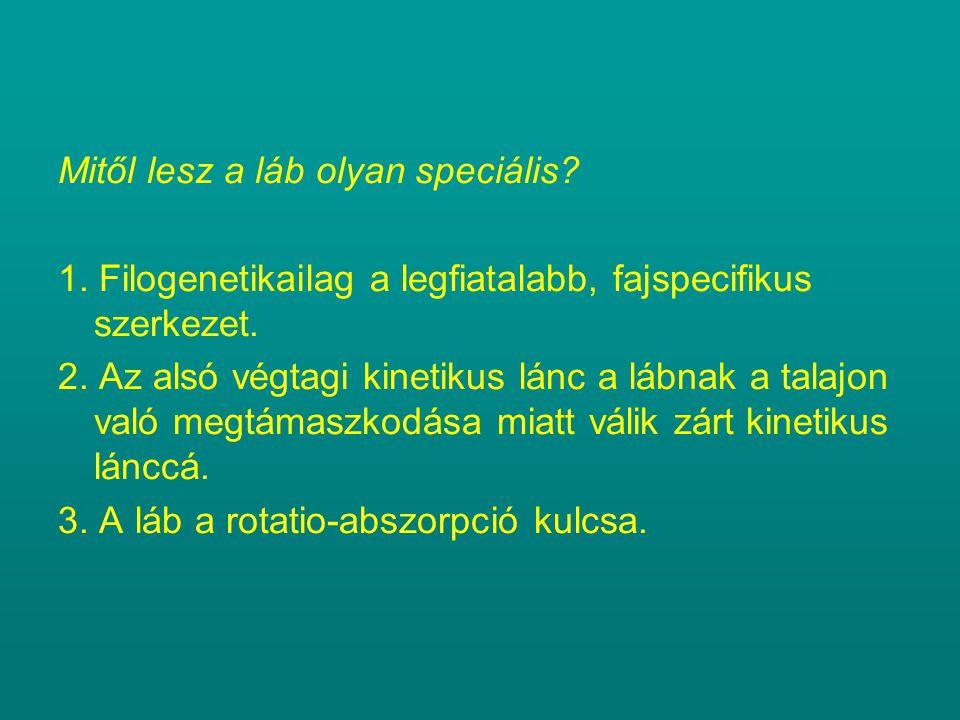 Mitől lesz a láb olyan speciális.1. Filogenetikailag a legfiatalabb, fajspecifikus szerkezet.