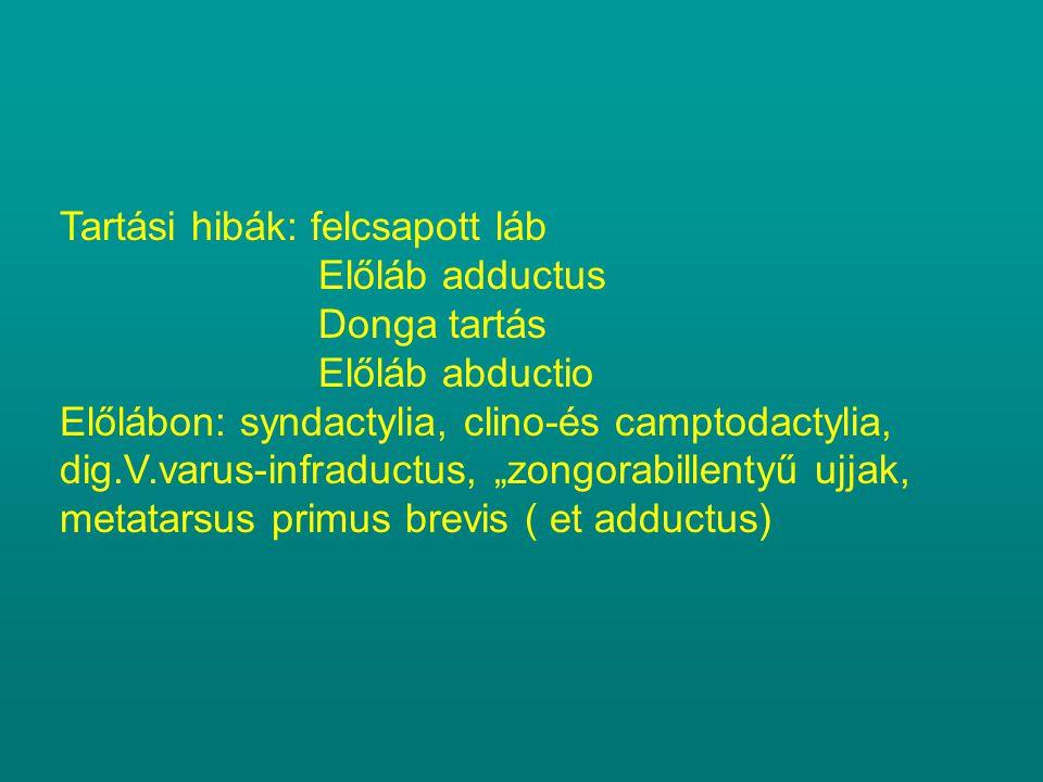 """Tartási hibák: felcsapott láb Előláb adductus Donga tartás Előláb abductio Előlábon: syndactylia, clino-és camptodactylia, dig.V.varus-infraductus, """"zongorabillentyű ujjak, metatarsus primus brevis ( et adductus)"""