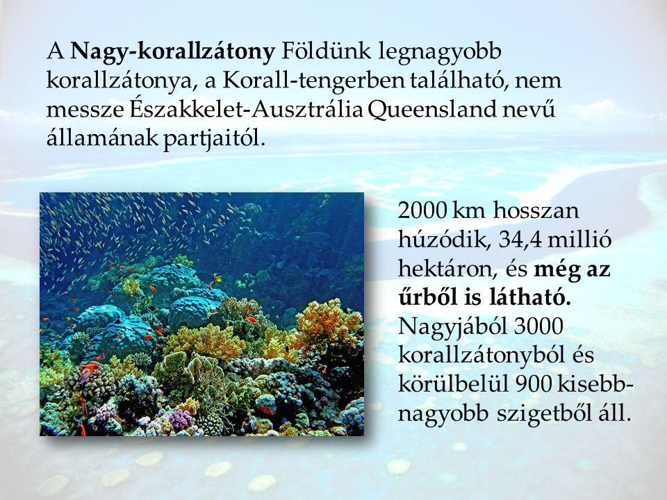 A Nagy-korallzátony Földünk legnagyobb korallzátonya, a Korall-tengerben található, nem messze Északkelet-Ausztrália Queensland nevű államának partjaitól.