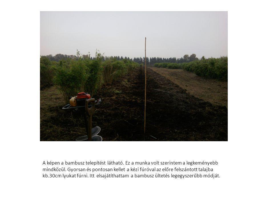 A képen a bambusz telepítést látható.Ez a munka volt szerintem a legkeményebb mindközül.