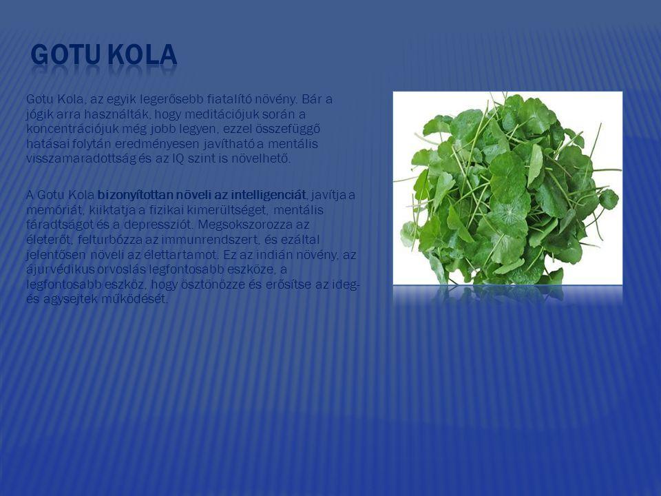 Gotu Kola, az egyik legerősebb fiatalító növény.