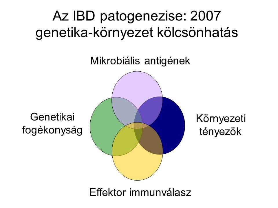 Az IBD patogenezise: 2007 genetika-környezet kölcsönhatás Genetikai fogékonyság Környezeti tényezök Mikrobiális antigének Effektor immunválasz
