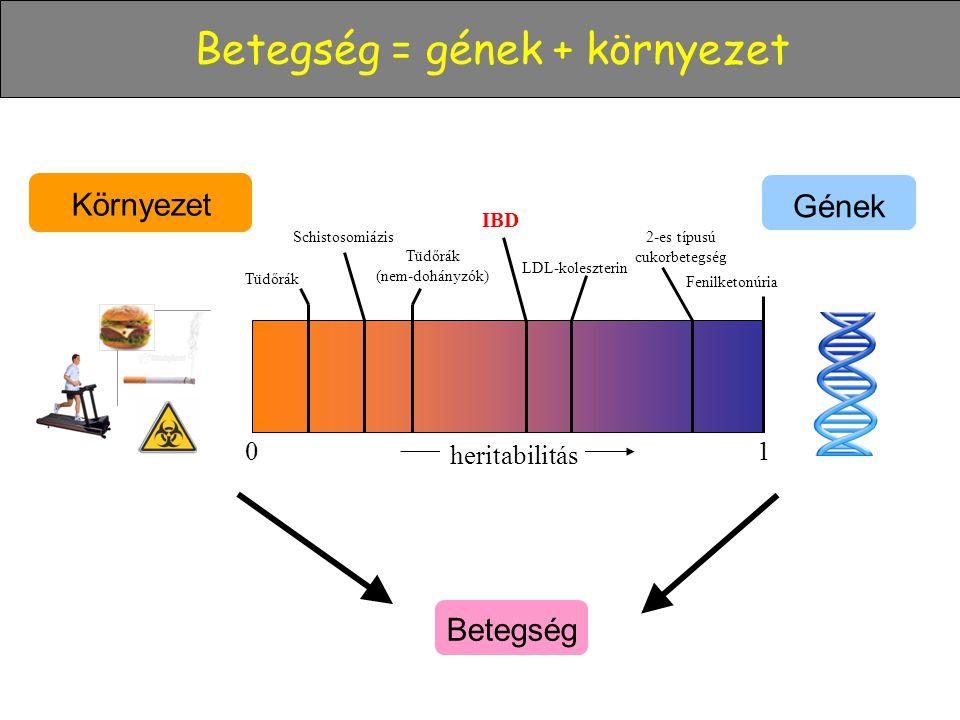 Környezet Gének 01 Fenilketonúria 2-es típusú cukorbetegség Tüdőrák (nem-dohányzók) Schistosomiázis IBD Betegség = gének + környezet Betegség heritabi
