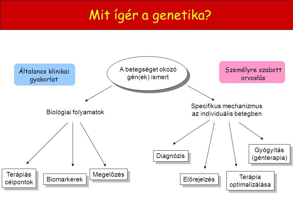 Mit ígér a genetika? A betegséget okozó gén(ek) ismert Biológiai folyamatok Terápiás célpontok Terápiás célpontok Biomarkerek Megelőzés Általanos klin