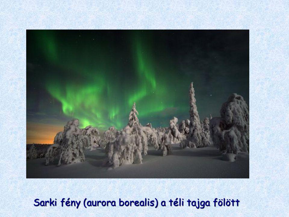 Sarki fény (aurora borealis) a téli tajga fölött
