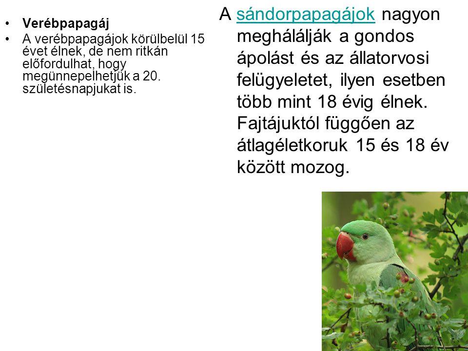 •Verébpapagáj •A verébpapagájok körülbelül 15 évet élnek, de nem ritkán előfordulhat, hogy megünnepelhetjük a 20. születésnapjukat is. A sándorpapagáj