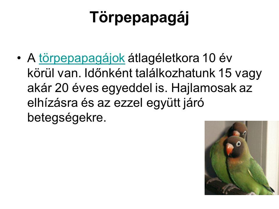 Törpepapagáj •A törpepapagájok átlagéletkora 10 év körül van. Időnként találkozhatunk 15 vagy akár 20 éves egyeddel is. Hajlamosak az elhízásra és az