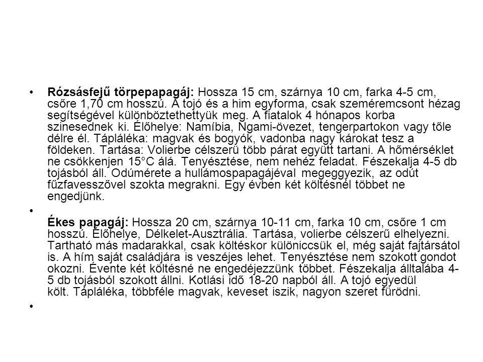 •Rózsásfejű törpepapagáj: Hossza 15 cm, szárnya 10 cm, farka 4-5 cm, csőre 1,70 cm hosszú.