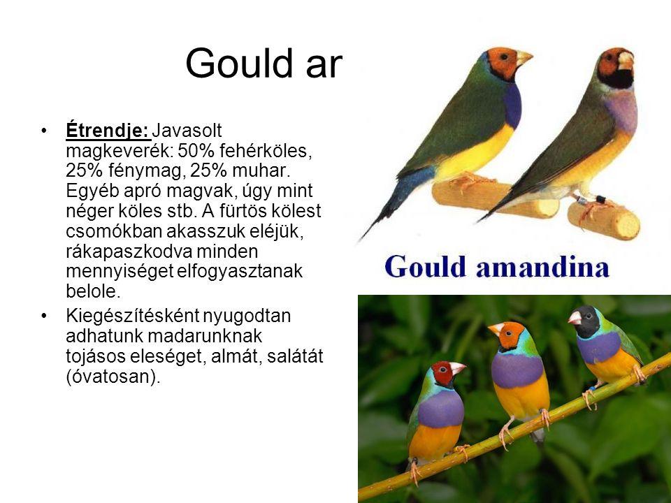 Gould amandina •Étrendje: Javasolt magkeverék: 50% fehérköles, 25% fénymag, 25% muhar. Egyéb apró magvak, úgy mint néger köles stb. A fürtös kölest cs