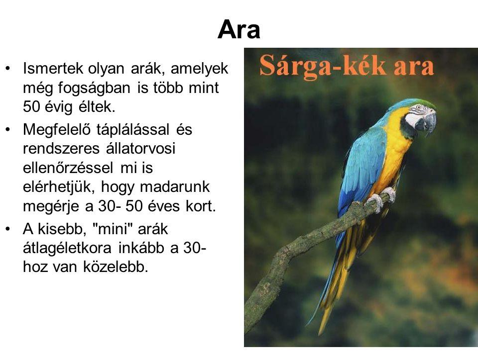 Ara •Ismertek olyan arák, amelyek még fogságban is több mint 50 évig éltek. •Megfelelő táplálással és rendszeres állatorvosi ellenőrzéssel mi is elérh