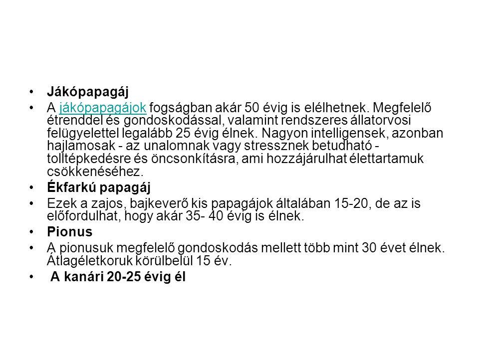 Lóri és lóripapagáj •Általában 15 -20 évig élnek.