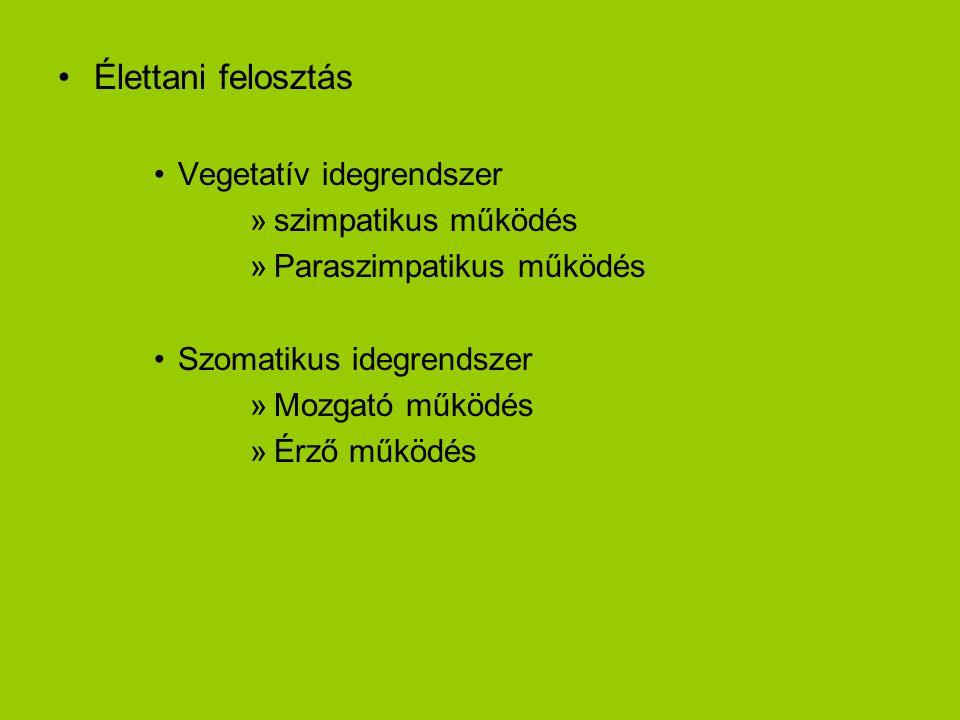 •Élettani felosztás •Vegetatív idegrendszer »szimpatikus működés »Paraszimpatikus működés •Szomatikus idegrendszer »Mozgató működés »Érző működés