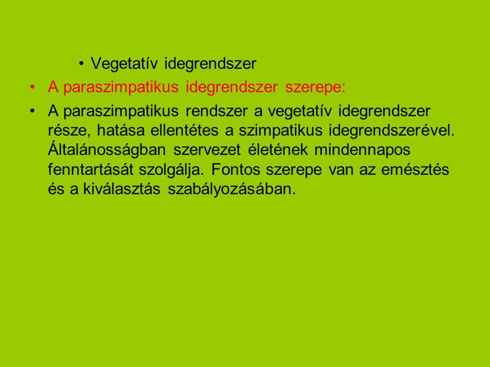 •Vegetatív idegrendszer •A paraszimpatikus idegrendszer szerepe: •A paraszimpatikus rendszer a vegetatív idegrendszer része, hatása ellentétes a szimp