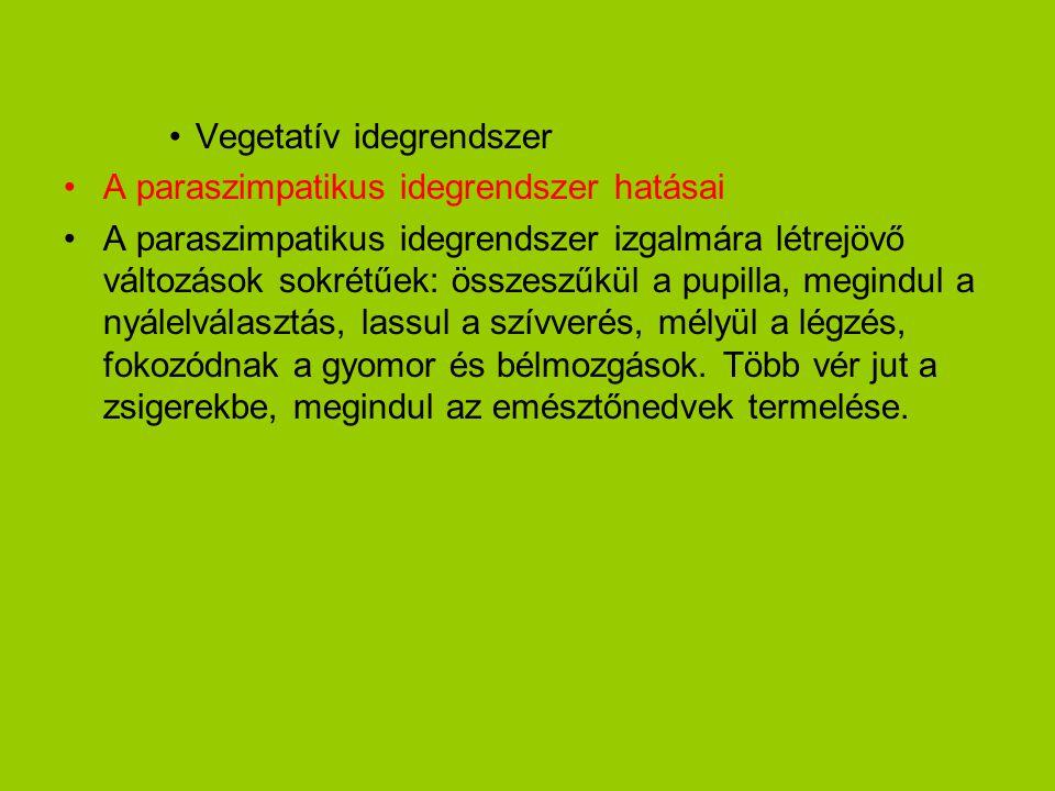 •Vegetatív idegrendszer •A paraszimpatikus idegrendszer hatásai •A paraszimpatikus idegrendszer izgalmára létrejövő változások sokrétűek: összeszűkül