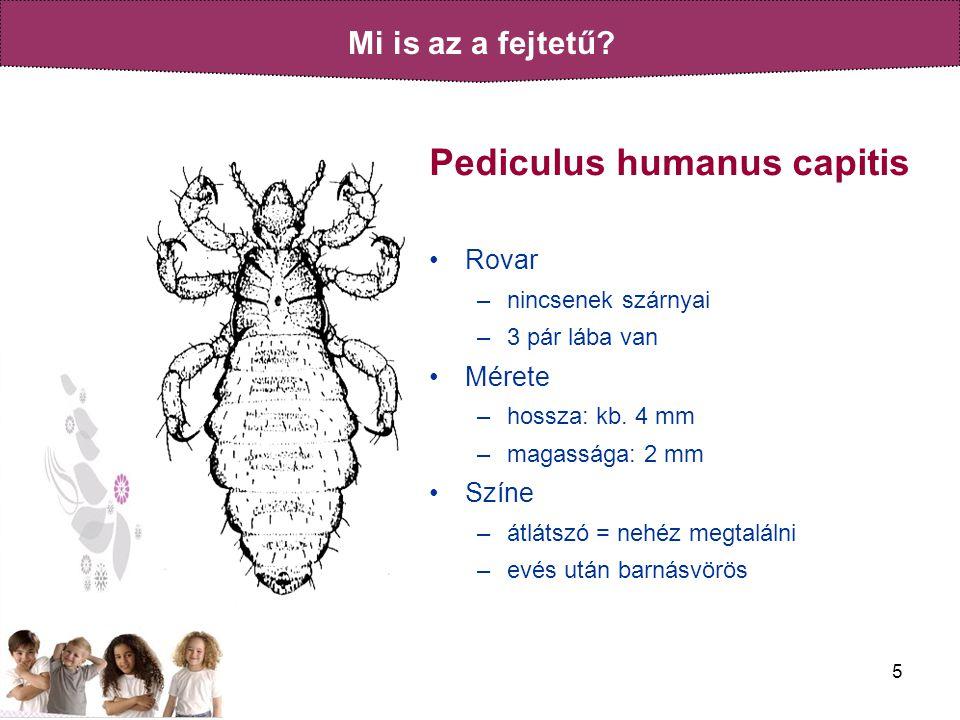 5 Pediculus humanus capitis •Rovar –nincsenek szárnyai –3 pár lába van •Mérete –hossza: kb.