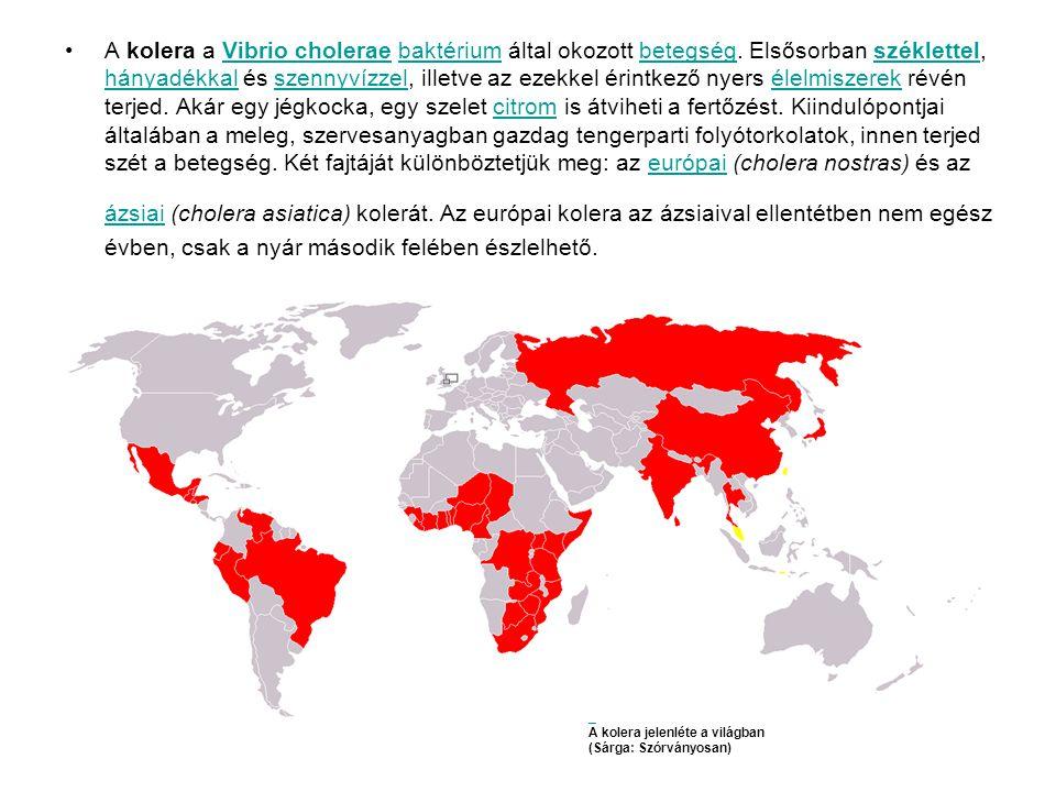 •A kolera a Vibrio cholerae baktérium által okozott betegség.