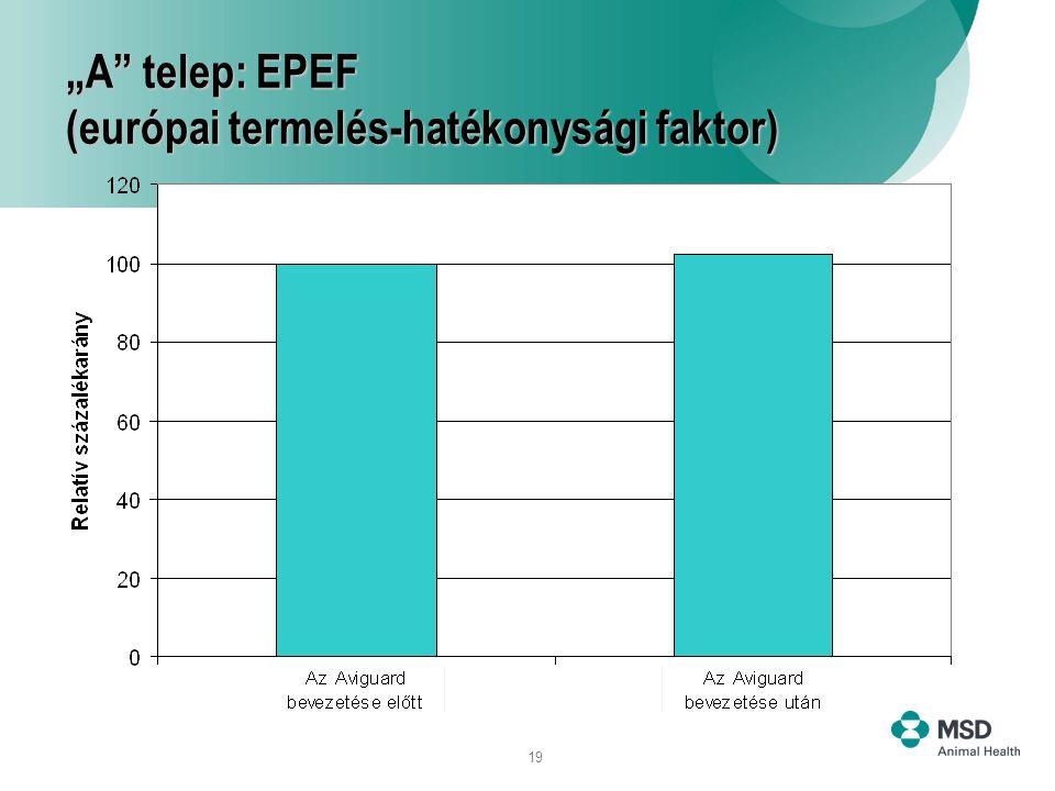 """19 """"A"""" telep: EPEF (európai termelés-hatékonysági faktor)"""