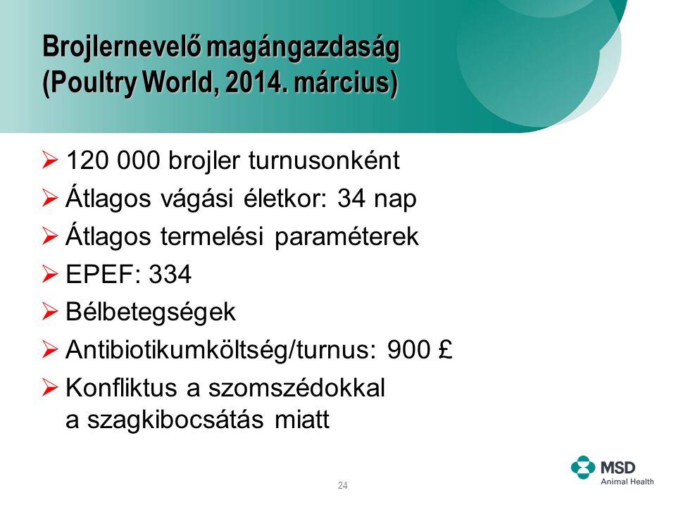 24 Brojlernevelő magángazdaság (Poultry World, 2014. március)  120 000 brojler turnusonként  Átlagos vágási életkor: 34 nap  Átlagos termelési para