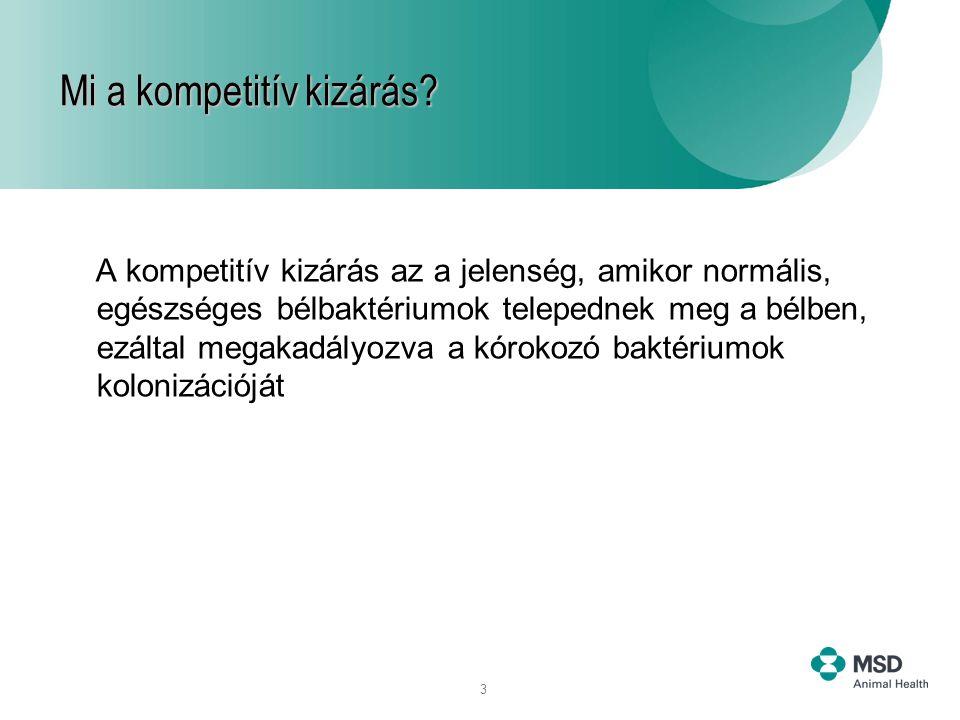 3 A kompetitív kizárás az a jelenség, amikor normális, egészséges bélbaktériumok telepednek meg a bélben, ezáltal megakadályozva a kórokozó baktériumo