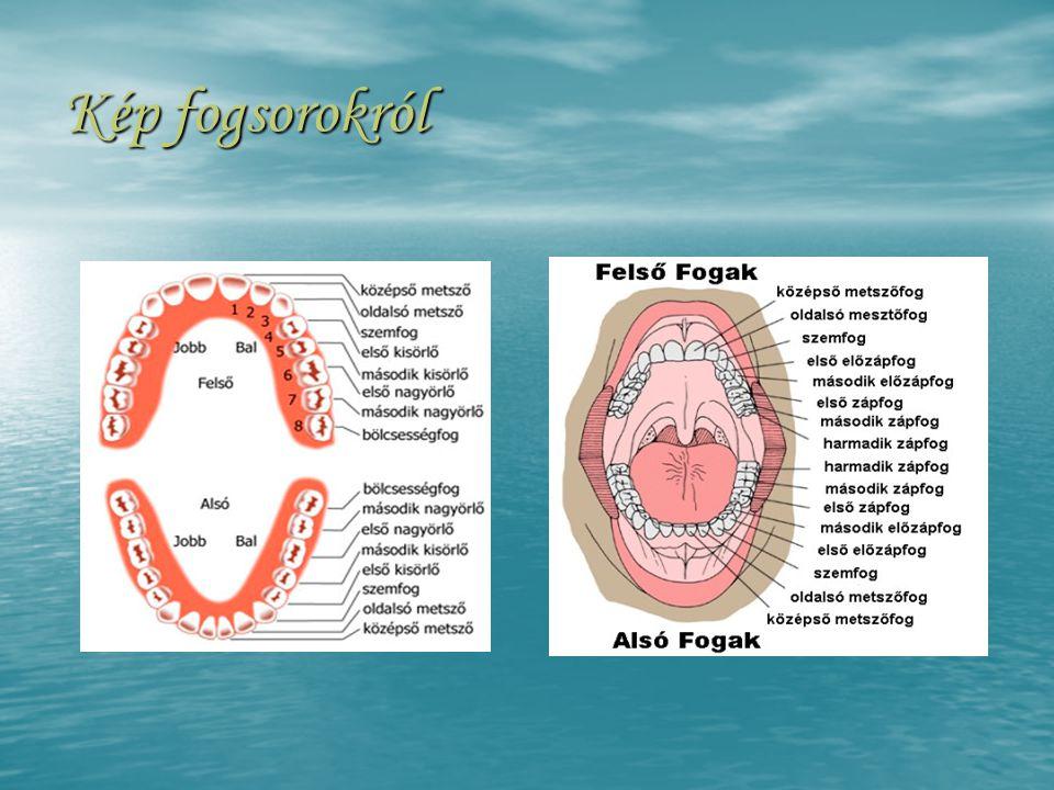 Kép fogsorokról