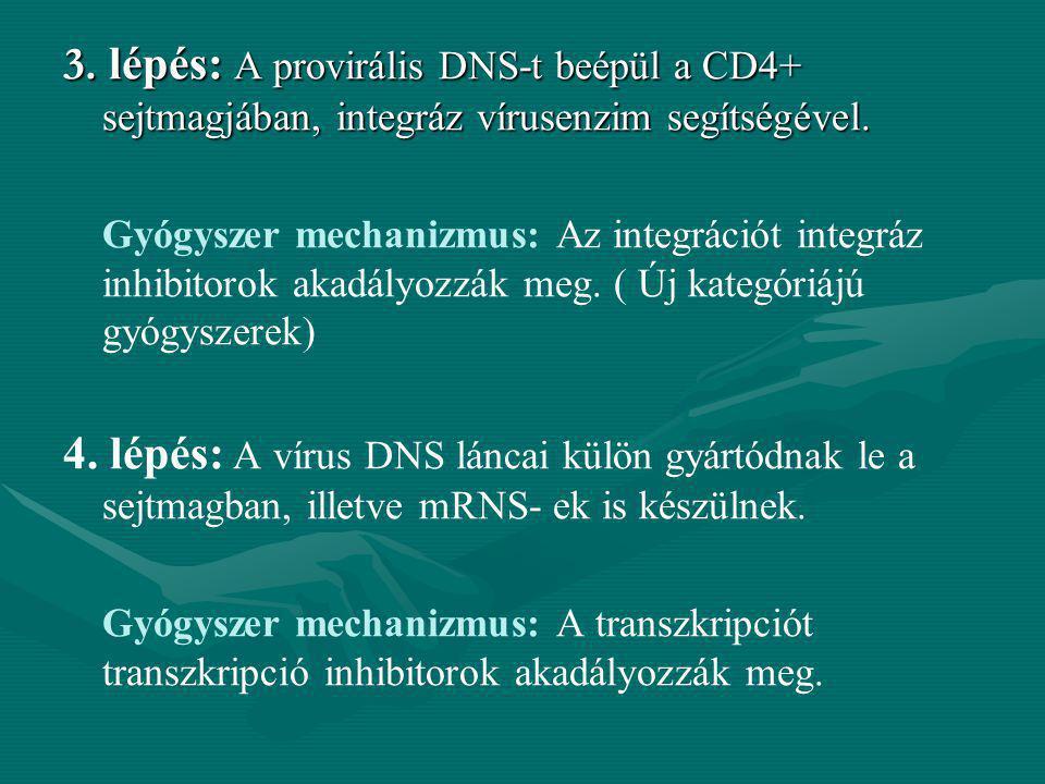 3. lépés: A provirális DNS-t beépül a CD4+ sejtmagjában, integráz vírusenzim segítségével. Gyógyszer mechanizmus: Az integrációt integráz inhibitorok
