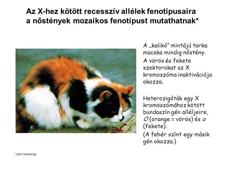 """A """"kalikó mintájú tarka macska mindig nőstény."""