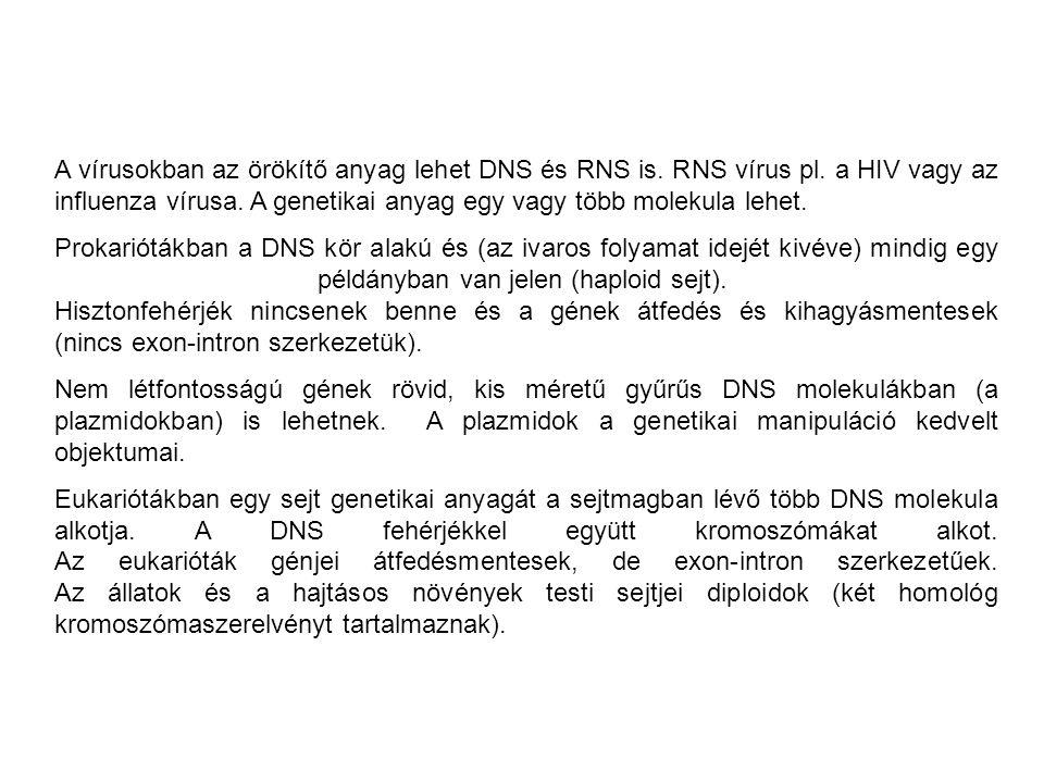 A vírusokban az örökítő anyag lehet DNS és RNS is.