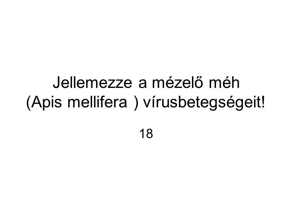 Jellemezze a mézelő méh (Apis mellifera ) vírusbetegségeit! 18