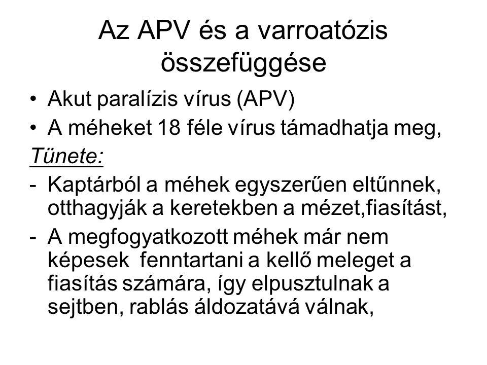 Az APV és a varroatózis összefüggése •Akut paralízis vírus (APV) •A méheket 18 féle vírus támadhatja meg, Tünete: -Kaptárból a méhek egyszerűen eltűnn